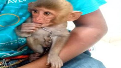 Hyderabad: Couple booked for using son, baby monkey to beg