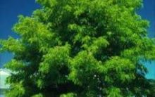 GOOD WORD AND THE GOOD TREE – Part 2