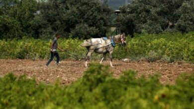 Photo of Gaza fields, ravaged by Israeli herbicides, bloom again