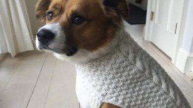 Photo of Captain America's furry friend pulls-off 'Knives Out' sweater