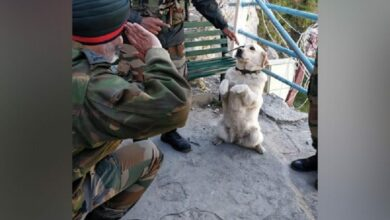 Photo of Story behind viral picture of the dog 'Menaka' saluting Army