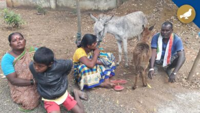 Photo of Quarrel over donkeys turns headache for Vikarabad police