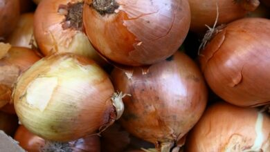 Photo of Onion prices ease in Delhi amid increased arrivals