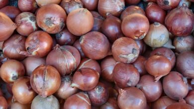 Photo of Steep Rise in Onion prices in Hyderabad