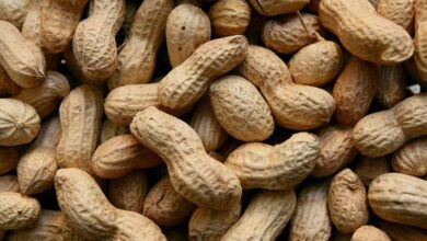 Photo of Peanuts, eggs may prevent food allergies in high risk infants