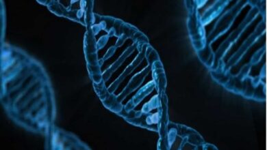 Photo of 'Jumping genes' provides stability to DNA folding patterns