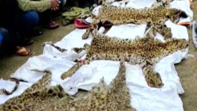 Photo of 7 arrested with four leopard skins in Chhattisgarh's Dantewada