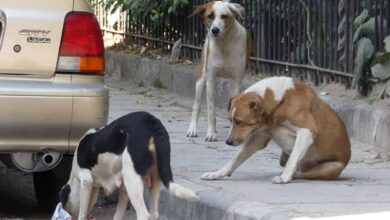 Photo of Hyderabad: Stray dogs ruling city roads