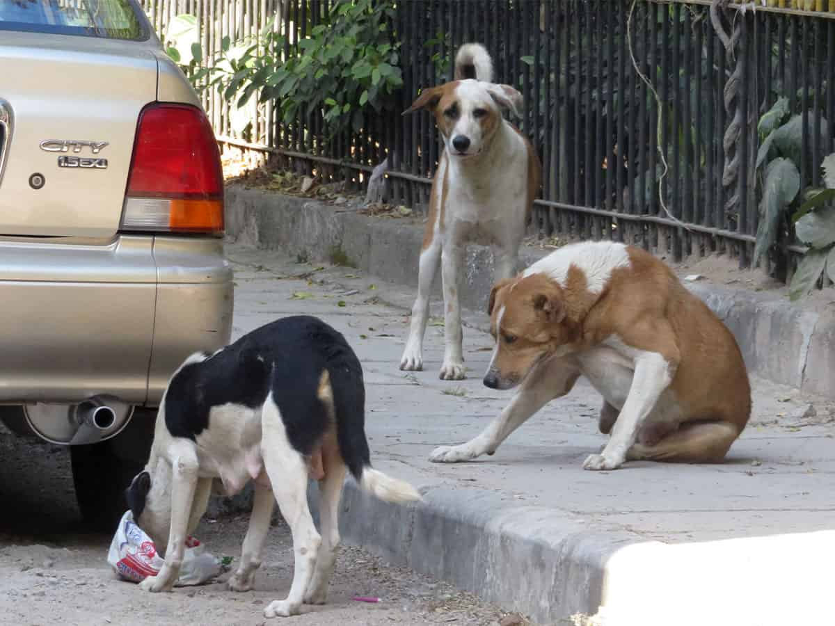 Stray dog population on the rise in Hyderabad