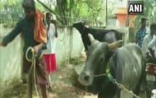 TN: Over 2,000 bulls to particpate in Jallikattu in Madurai