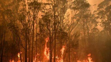 Photo of Bushfires rage in Australia, Canberra airport shut