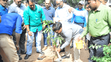 Photo of NI-MSME holds plantation drive