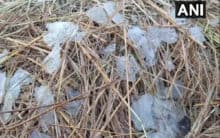 Blanket of frost covers Similipal National Park in Odisha