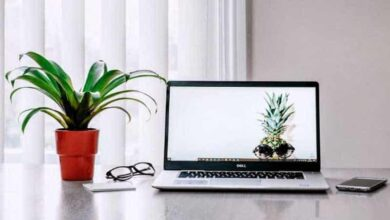 Photo of Keep small plants at your work desk to reduce stress: study