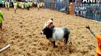 Photo of 1000 bulls participate in Jallikattu in Coimbatore