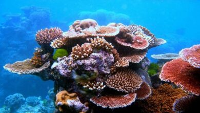 Photo of Coral disease risk factors revealed