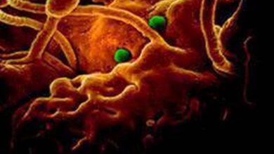 Photo of Coronavirus toll mounts to 2,744 in China