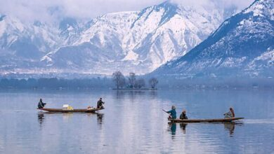 Photo of Scores of shikaras on Dal lake without any work