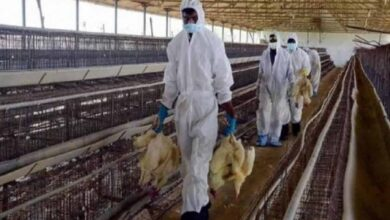 Photo of H5N8 Bird flu outbreak reported in Saudi Arabia