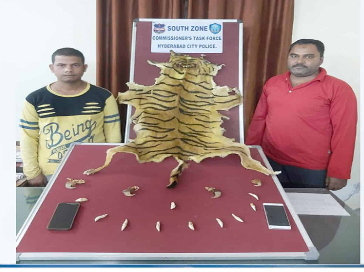Task force nab two for selling fake tiger skin