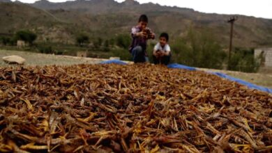 Photo of Pak declares national emergency over locusts