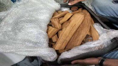Photo of Sandalwood worth Rs 25 crore seized in Tripura