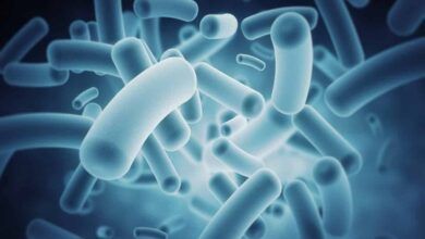 Photo of Cancer immunotherapy success may depend on gut bacteria: Study
