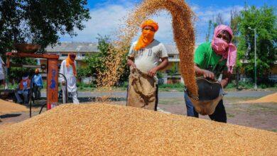 Photo of Coronavirus Lockdown: Farmers harvest wheat crops