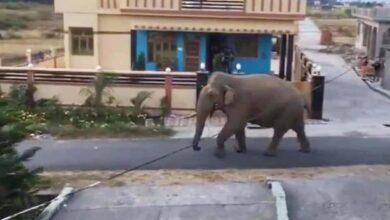 Photo of Lockdown: Wild animals are having a gala time in Karnataka