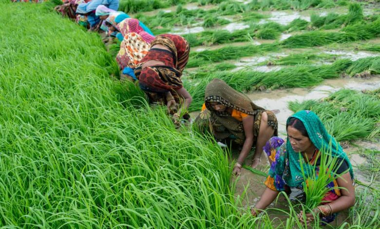 COVID-19 gives opportunity to change food supply system in India