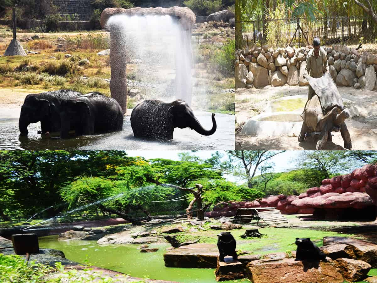 Hyderabad's zoo staff prepares to protect animals from summer
