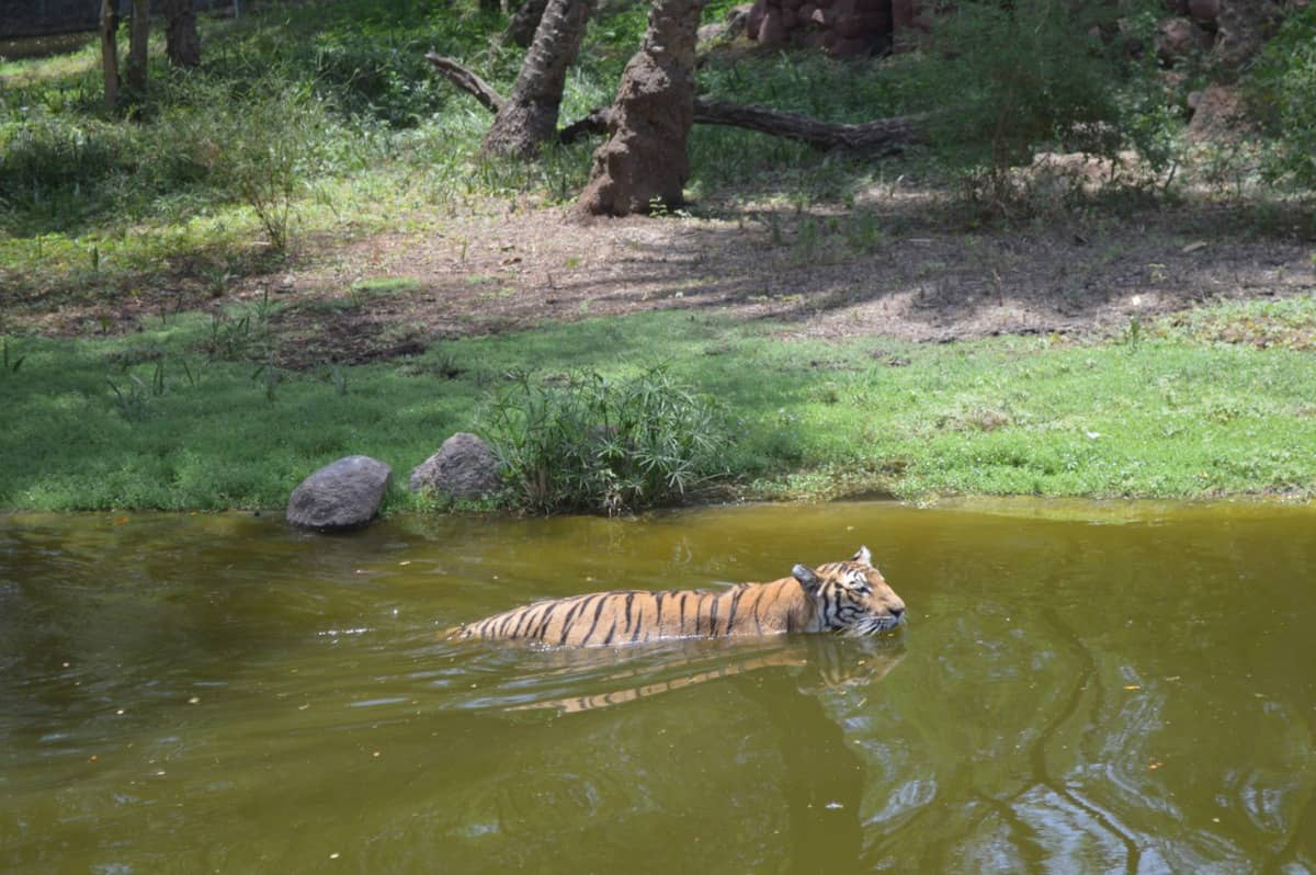 Nehru Zoo on alert to protect animals from COVID-19