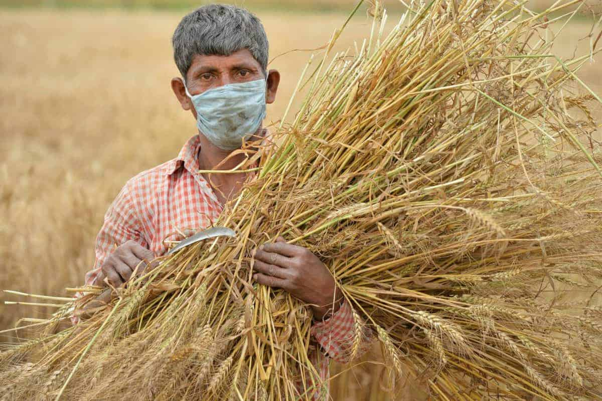 Telangana farmers can now grow only what the govt wants