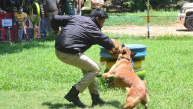 Karnataka Police to recruit 50 dogs at Rs 2.5 crore