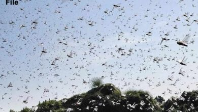 Photo of Locust clouds over Gururgram, likely to spare Delhi