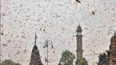 Photo of Erstwhile Hyderabad State witnessed locust attack 90 years ago
