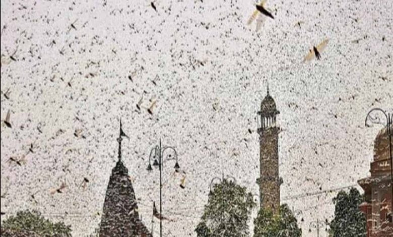 Locust attack in Hyderabad
