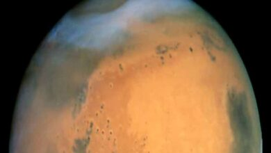 Photo of Terrestrial life unlikely to contaminate Mars: Study