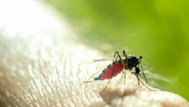 """Photo of Risk of """"Dengue"""" could strike earlier than expected in 2020"""