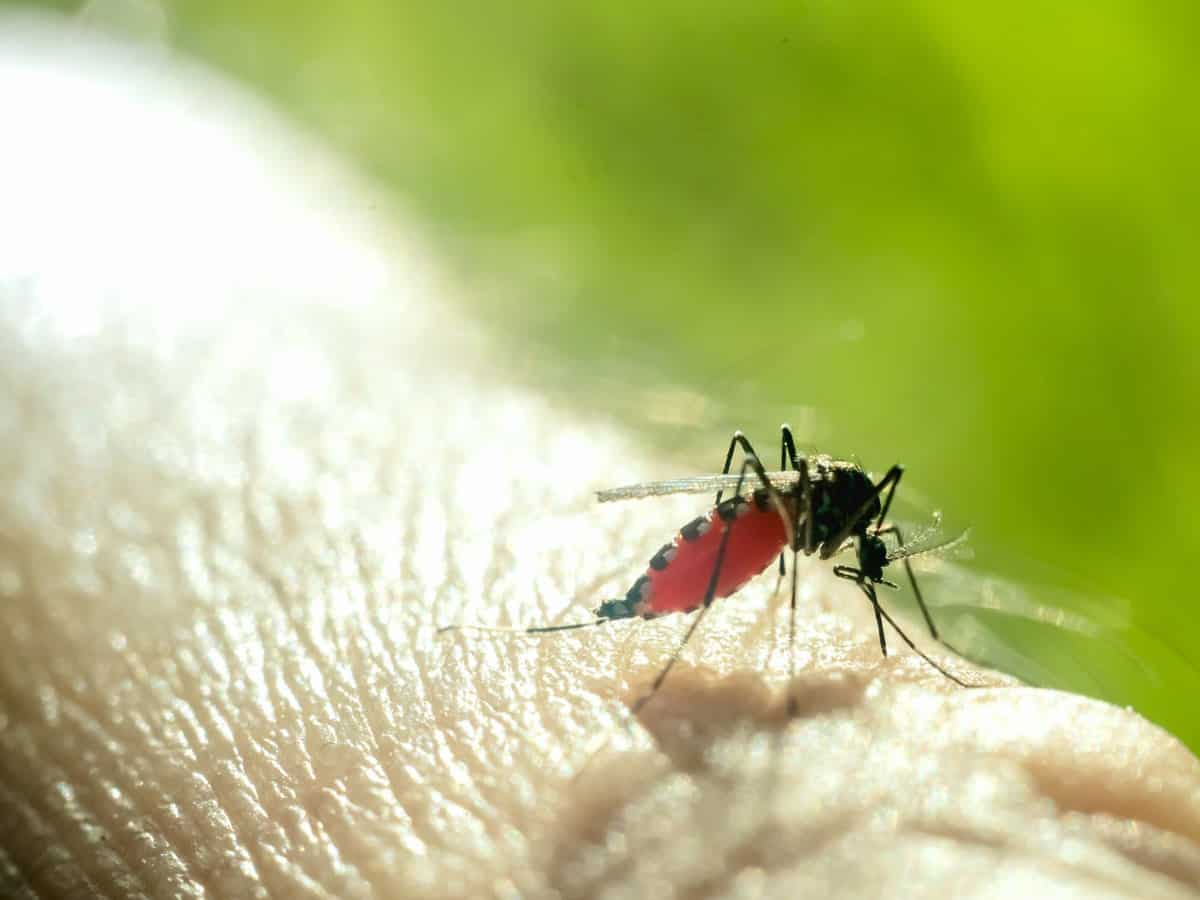 """Risk of """"Dengue"""" could strike earlier than expected in 2020"""
