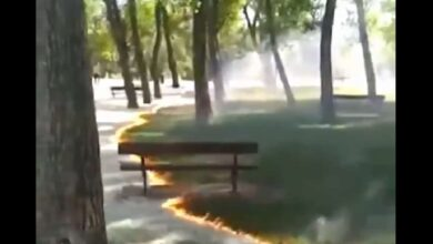 Photo of Fire sweeps through park without damaging trees and grass
