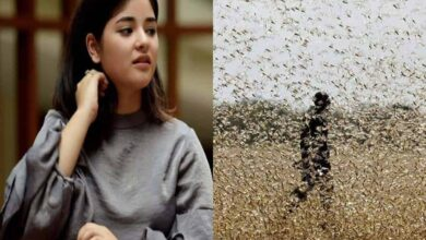 Photo of Zaira Wasim quotes Quranic verse to justify locust attack