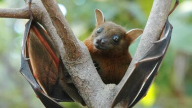 Photo of COVID-19 virus has been circulating in bats for decades: Study