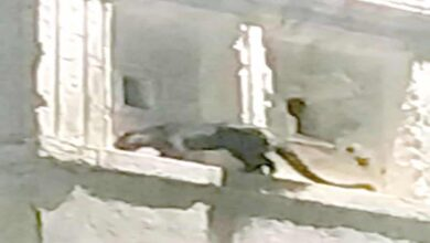 Photo of Hyderabad: Panther like wild cat in Golconda creates panic