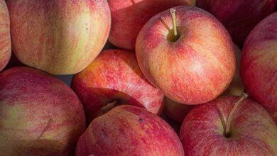 Photo of 'Little Kashmir' in Telangana: Tribal farmer harvests apple crop