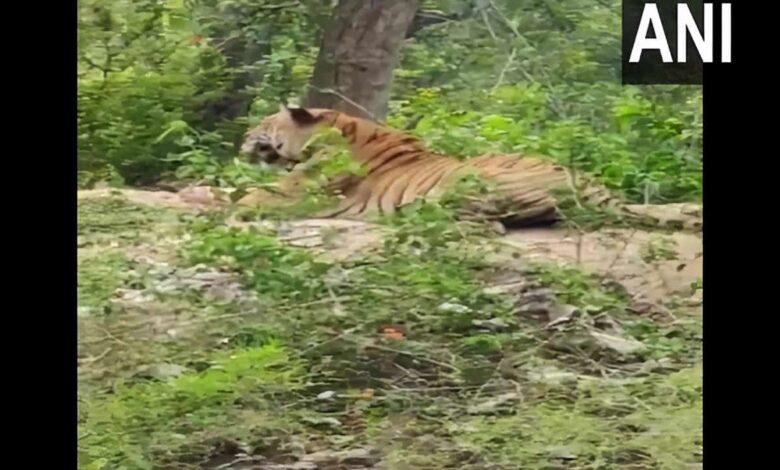 Tiger in Karnataka