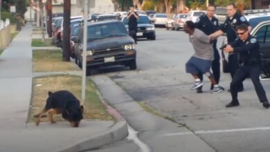 Photo of US police kill black man's dog, 2015 video resurfaces