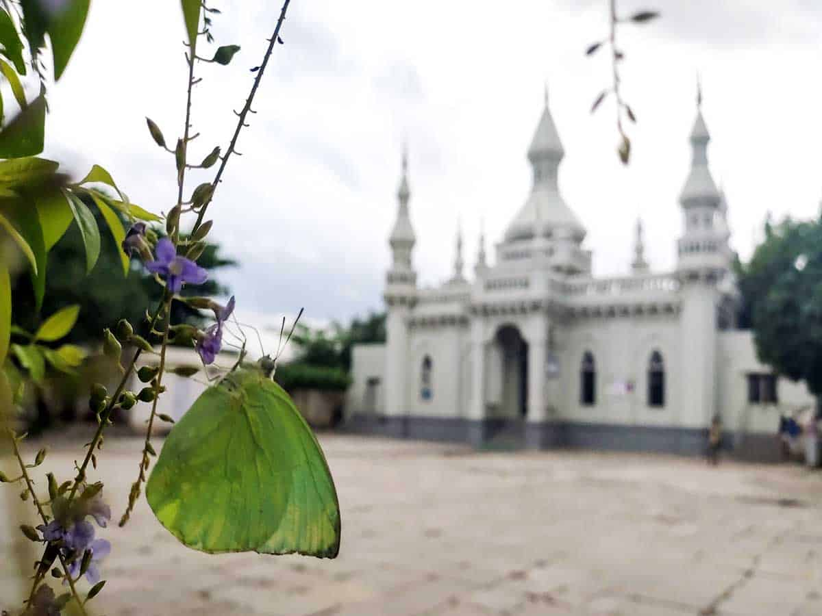 Common emigrant butterfly fluttering near Spanish Mosque at Rasoolpura in Hyderabad. Photo: Mayank Tiwari