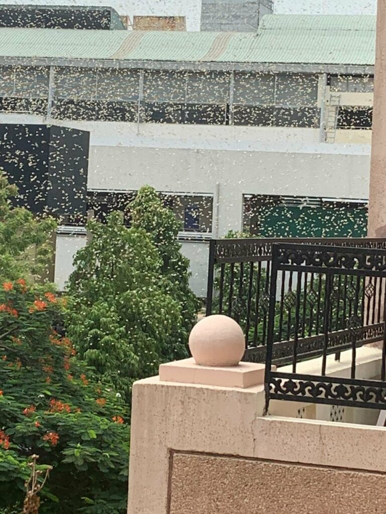 Gurugram: A swarm of locusts fly past a DLF building, in Gurugram, Saturday, June 27, 2020.