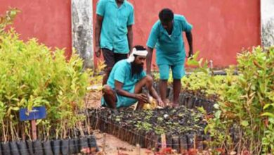 Photo of India's biggest plant nursery in jail takes root in Telangana
